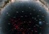 Pisces-Eridanus stellar stream utmarkerad över Vintergatan.