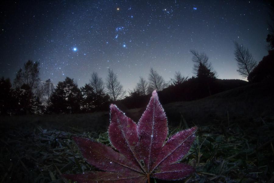 Fotografi som visar Orion på himlen en frostig natt. Orion syns bra på vintern från norra halvklotet och man kan (när molnen behagar försvinna) ge sig ut och kolla till Betelgeuse som är den röda stjärnan i Orions axel. Bild av Masahiro Miyasaka.