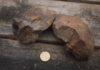 Stenar från sjön Mien som innehåller mineralet zirkon. Detta är stenarna som Josefin Martell använt i sin studie och plockat ur mikrometersmå prover från. Bild: Josefin Martell